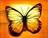 Butterfly-effect1
